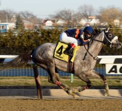 Gotham Stakes Preview: El Areeb Looks to Keep Rolling