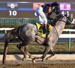 El Areeb Continues Toward Kentucky Derby With G3 Withers Win