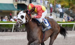 Fear the Cowboy the Skip Away wins Skip Away at Gulfstream credit Kenny Martin/Coglianese Photo