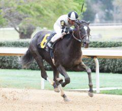 California Shipper It Tiz Well Wins G3 Honeybee Stakes, Earns 50 Kentucky Oaks Points