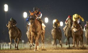 Mind Your Biscuits (USA) (Chad Summers - Joel Rosario) wins the Dubai Golden Shaheen Sponsored by Gulf News at the DWC at Meydan (Dubai racing club, Andrew Watkins)