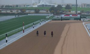 Morning Trackwork on a rainy day in Dubai (Photo credit, Dubai Racing Club and Neville Hopwood)