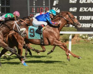 Sonic Boom wins Columbia Stakes - Tampa Bay Downs - 3-11-17 - Photo Credit: SV Photography