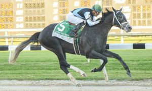 Tapwrit wins Tampa Bay Derby - Tampa Bay Downs - 3-11-17 - Photo Credit: SV Photography