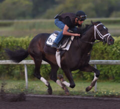 Always Dreaming Works at Palm Beach Downs, Set to Ship to Churchill