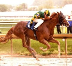 Racing Dudes Three Stars of the Week: State-Bred Races Take Center Stage