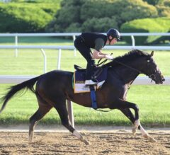 Belmont Park Notes: Irish War Cry Gets First Look at Track, Epicharis Lameness Issues