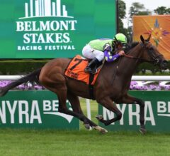 Belmont Oaks Preview: In Chad Brown We Trust