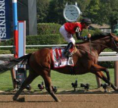 Vanderbilt Handicap Preview: A.P. Indian Looks to Repeat