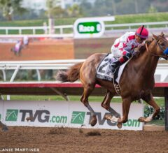 Somo Bombs: Del Mar and Saratoga Picks for August 17, 2019