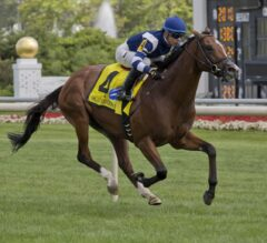 Joe Hirsch Turf Classic Preview: Solid Group Preps for Breeders' Cup