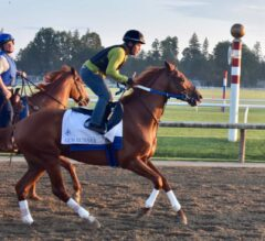 """Breeders' Cup Skinny: The Classic & the """"Training Up"""" Dilemma"""