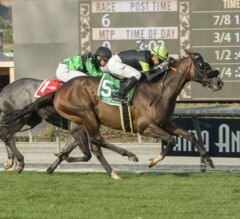 Bowies Hero Up In Time To Take G2 Mathis Brothers Mile