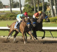 Rebel Stakes Preview: Heavy Hitters Invade Oaklawn Park