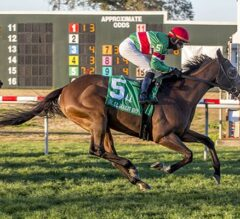 Tower Of Texas Towers Over Foes, Wins $125,000 Colonel E. R. Bradley