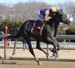 Midnight Disguise Rallies Home First In $100,000 Busanda