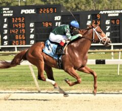 Tampa Bay Derby Preview: Vino Rosso Ready to Step Up