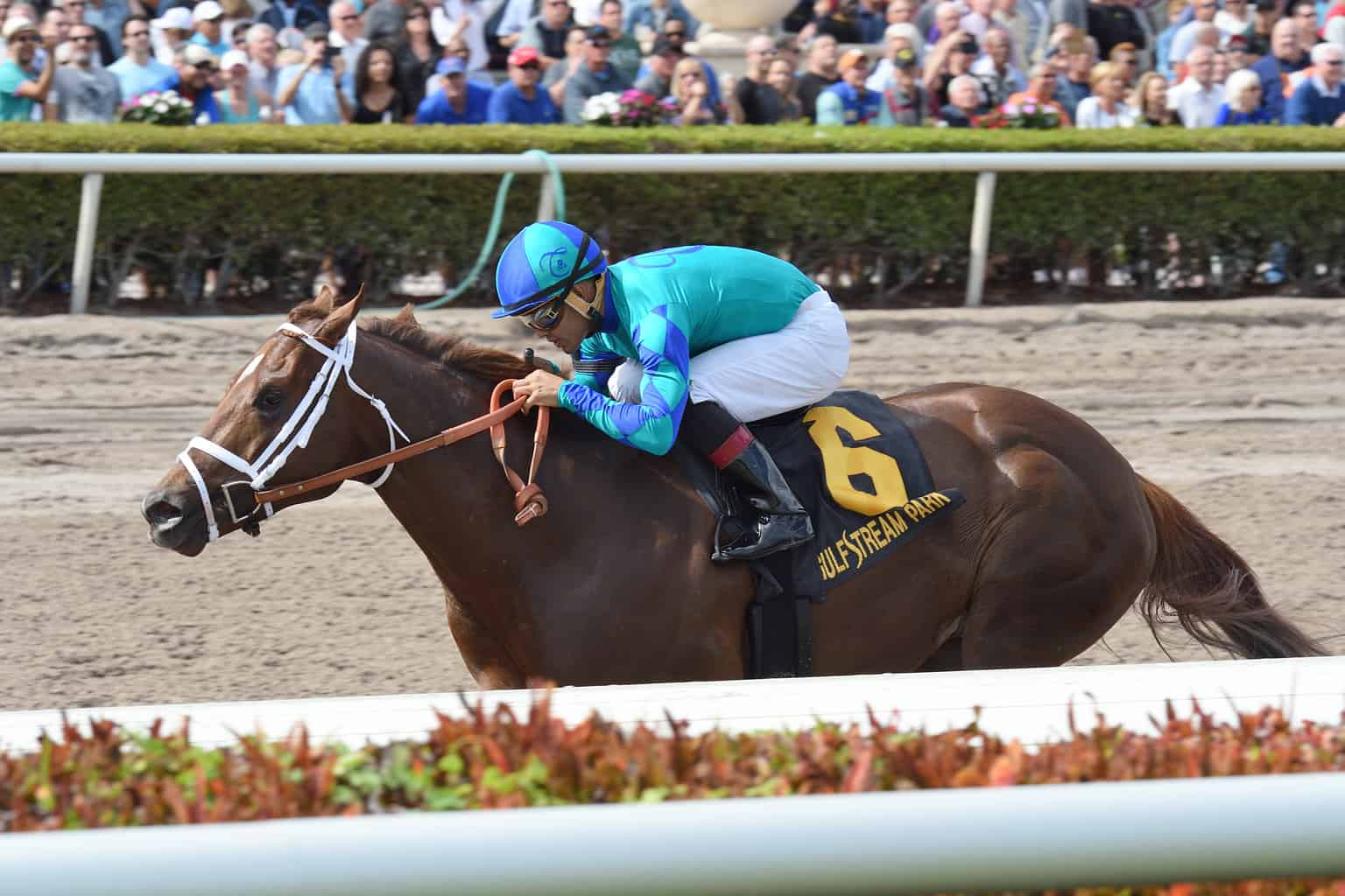 A record 2010 billion was wagered via Gulfstream Park in 2018