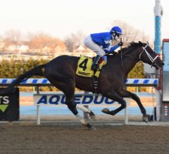 Avery Island Impressive In G3 Withers
