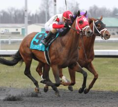 Camelot Kitten Crowned Millionaire $100,000 Kentucky Cup Classic