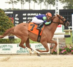 War Story Romps In $100,000 Challenger