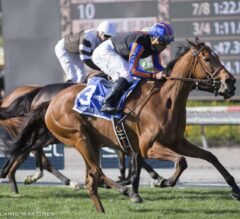 Beau Recall Bursts Ahead in the G2 Royal Heroine