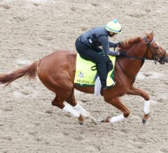 Racing Dudes Fantasy Update: Belmont Stakes Report