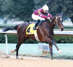 Jim Dandy Preview: Small Field Lines Up for Travers Prep