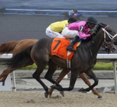 Miss Mo Mentum Digs in to Win the G3 Selene
