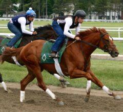 Motts Bring Hofburg & History to Belmont Stakes
