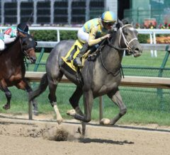 Tampa Bay Derby Preview: Dream Maker Steps Up