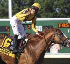 Jose Ortiz Wins 5 Races at Aqueduct