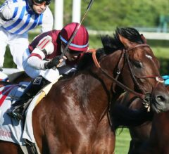 Divisidero Didn't Give Up in the G3 Arlington Handicap