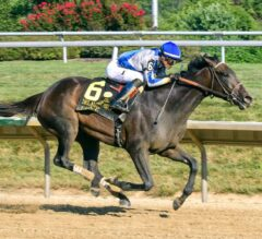 Racing Dudes Three Stars of the Week: Elate Romps at Delaware Park