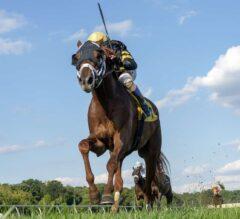 Channel Cat Soars in $150,000 Bald Eagle Derby