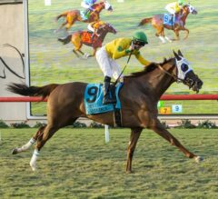 Rodeo Drive Stakes Preview: Vasilika Goes for 7 in a Row