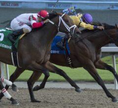 Wyatt's Town Wins Hard-Fought $100,000 Ontario Jockey Club
