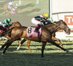 Chicago Style Fashionably Fast in G2 Hollywood Turf Cup