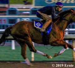 Top 2019 Pegasus World Cup Contenders Blaze in Final Works