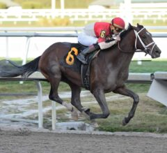 Bourbon War Dominant in Friday Feature, Fountain of Youth Likely Target