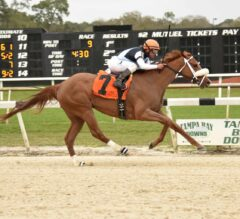 Point of Honor Pulls Away Late in $150,000 Suncoast