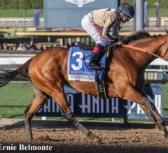 Marley's Freedom Up Late in G2 Santa Monica