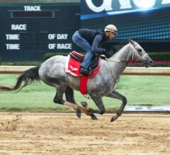 Southwest Stakes Preview: Gray Attempt Ready for Next Test