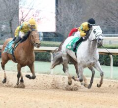 Heartwood holds on in $100,000 King Cotton