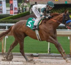Sunland Derby Preview: Mucho Gusto Takes on Anothertwistafate