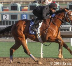 Kentucky Derby Trail Tracker: Gotham a Play-In Race for Sprinters