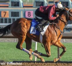 Gotham Stakes Preview: Instagrand Ready for 3-Year-Old Debut