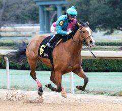 Raintree Starlet Scores Big in Dixie Belle