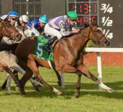 Concrete Rose Conquers Florida Oaks