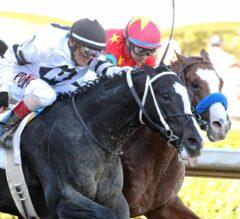 Arkansas Derby Preview: Scramble for Points in Final Derby Prep